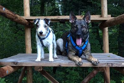 Das Hundetrio der Parson Russell Terrier Zucht Birchmatt, Kiwi, Sanny und Sunday